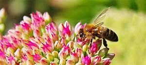 bienen schutzen bienenpflanzen fur fensterbrett garten With französischer balkon mit pflanzen für bienen im garten