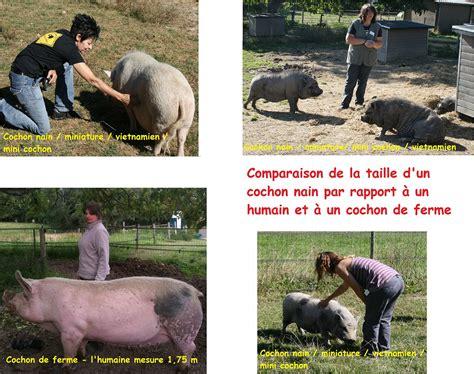 guide de poche du cochon nain