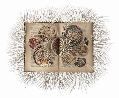 Books Barbara Cut Paper Sculptures Into Systems