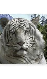 Blue Eyed White Bengal Tiger Fleece Blanket for Sale by ...