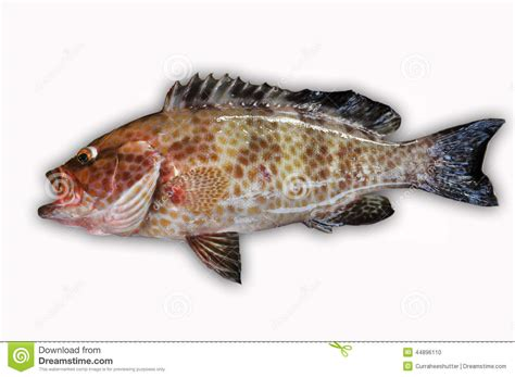 fish food grouper healthy background sea fresh fillet alive fishing