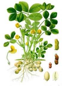 Tea Tree Oil Uses Images