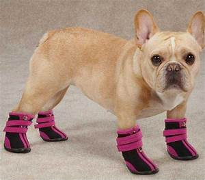 help your dog beat the heat this summer top tails dog With where can i buy dog shoes