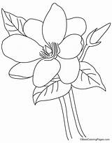 Magnolia Flower Coloring Pages Bestcoloringpages sketch template