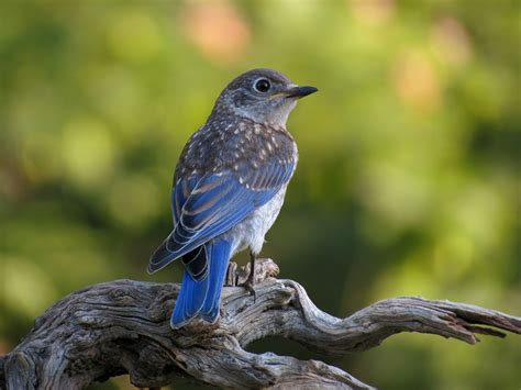 backyard birding with kenn temple attracting caring