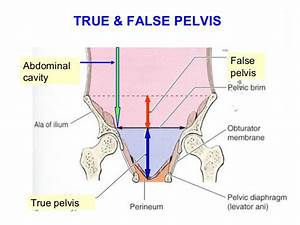 Applied Anatomy Of Pelvis And Fetal Skull