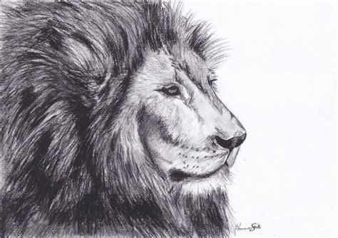draw animals ep  lion youtube