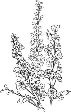 119 best images about coloring pages on Pinterest