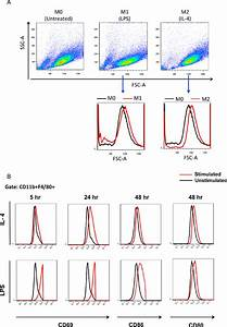 Macrophage Activation Analysis By Flow Cytometry   A  Upon Activation