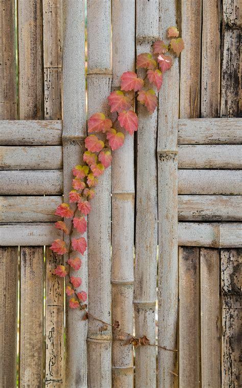 Jeffrey Friedls Blog Fence And Vine