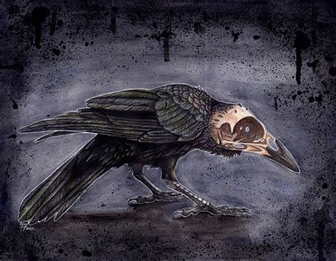 242 Best Images About Crow Illustration On Pinterest