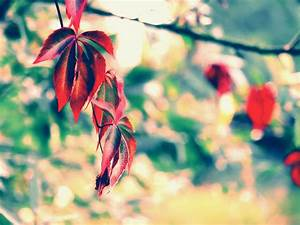 wallpapers: Digital Photography Wallpapers