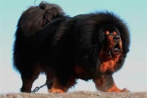 Giant Fluffy Dog Breeds