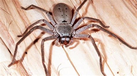 How To Get Rid Of Spiders In Your House, Basement Or Garage