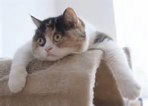 hilarious cats cats part 17 41 pics amazing creatures