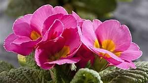 Was Sind Frühlingsblumen : mit fr hlingsblumen den balkonkasten bunt bepflanzen ~ Whattoseeinmadrid.com Haus und Dekorationen