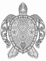 Coloring Pages Turtle Printable Mandala Adult Zentangle Adults Coloringhome Animal 1000 Detailed Books sketch template