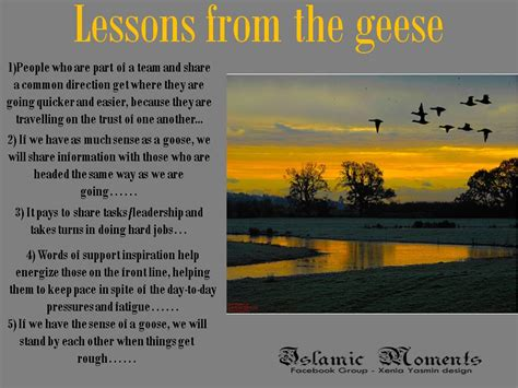 geese quotes image quotes  hippoquotescom