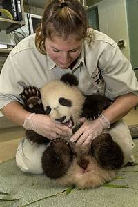 45 best images about Wildlife Vet on Pinterest