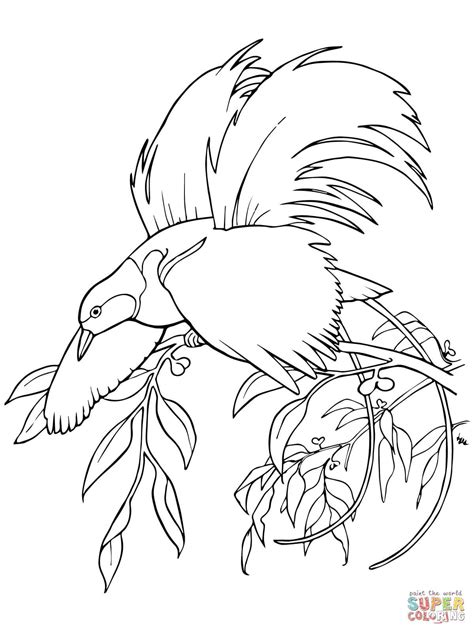 Greater Bird-of-Paradise | Super Coloring in 2019 | Bird coloring pages, Greater bird of