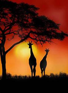 Giraffe Sunset somewhere in Africa. Really gives you the ...