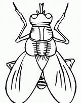 Insect Coloring Outline Fly Printable Popular sketch template