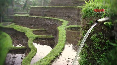 subak irigasi tradisional alam bali youtube