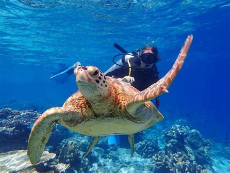 Dive Sipadan by Top 15 Best Scuba Diving Location In Malaysia Sipadan