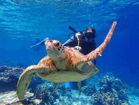 Dive Sipadan top 15 best scuba diving location in malaysia sipadan