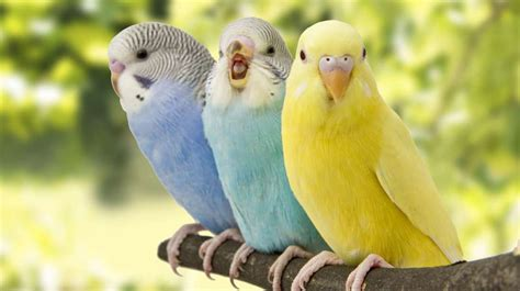 amazing facts   birds mental floss
