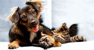 Funny Cats And Dogs Wallpaper Hd Description 6540 Puppy ...