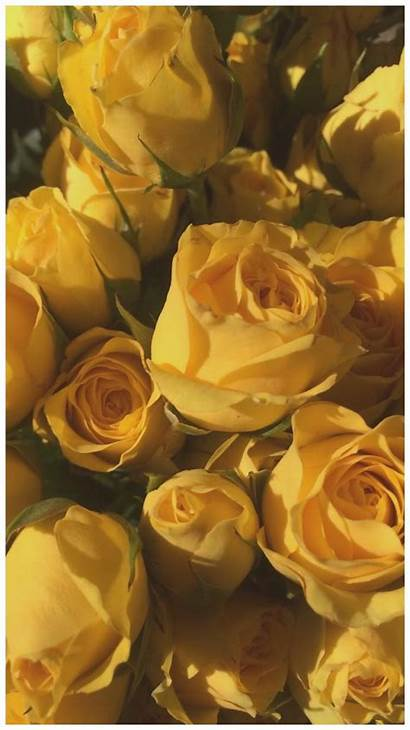 Aesthetic Yellow Wallpapers Flower Flowers