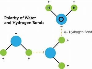 Covalent Bonds | CK-12 Foundation
