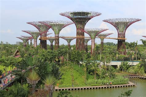 gardens by the bay singapore greening of singapore the permaculture research institute