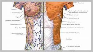 Anatomy System