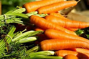 What to plant now - Container Vegetables - Growing Family  Carrot