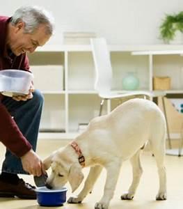 dog healthcare dogs diarrhea explained