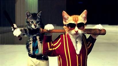 Cool Cat Funny Cats