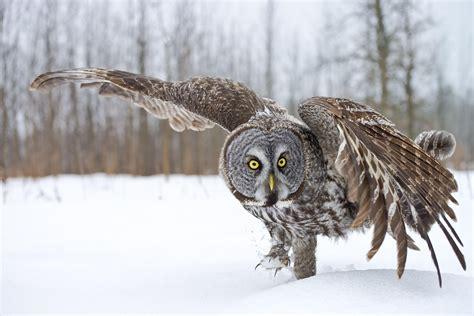 owl vocabulary  understand  world