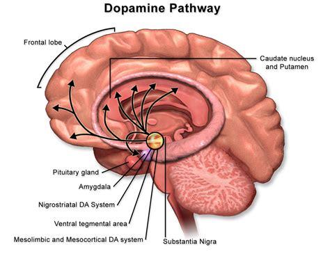 motivation  emotionbookalcohol dopamine