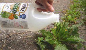 Traitement Mauvaise Herbe : saviez vous que le vinaigre blanc est un herbicide efficace pas cher et facile d 39 utilisation ~ Melissatoandfro.com Idées de Décoration