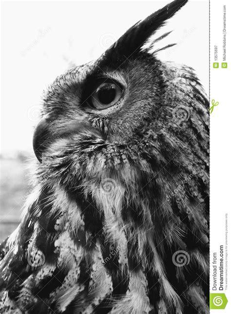 eagle owl portrait black  white stock image image