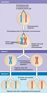 Understanding Williams Syndrome  Genetics