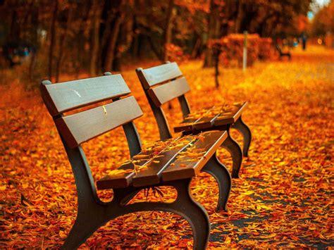 autumn park benches wallpaper hd backgrounds