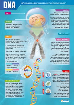 dna science poster