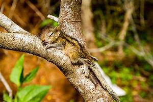 Abandoned Baby Squirrel Rescued By Filmmaker Becomes Best