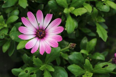 Welche Blumen Vertragen Viel Sonne by Pflanzen Die Viel Sonne Vertragen Und Wenig Wasser