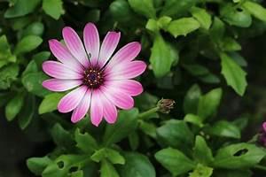 Geranien Gelbe Blätter : pflanzen f r die pralle sonne diese balkon und k belpflanzen eignen sich ~ Orissabook.com Haus und Dekorationen