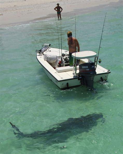 sarasota key beach nokomis florida shark west casey sharks teeth gulf kayak bridge mexico ocean road siesta turtles sea natural