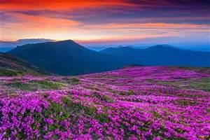 Wann Blüht Der Rhododendron : rhododendron d ngen wann mit welchem d nger wie ~ Eleganceandgraceweddings.com Haus und Dekorationen